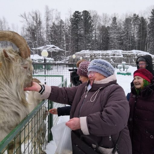 зоопарк, туризм, парус