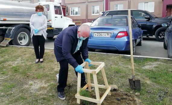 Владимир Семенов, Галина Лапковская, кедры, Пойково, экология